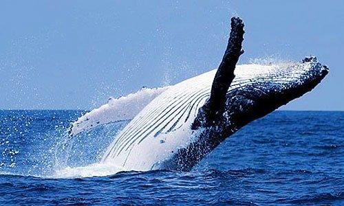 クジラの死骸が爆発する!?色ん...